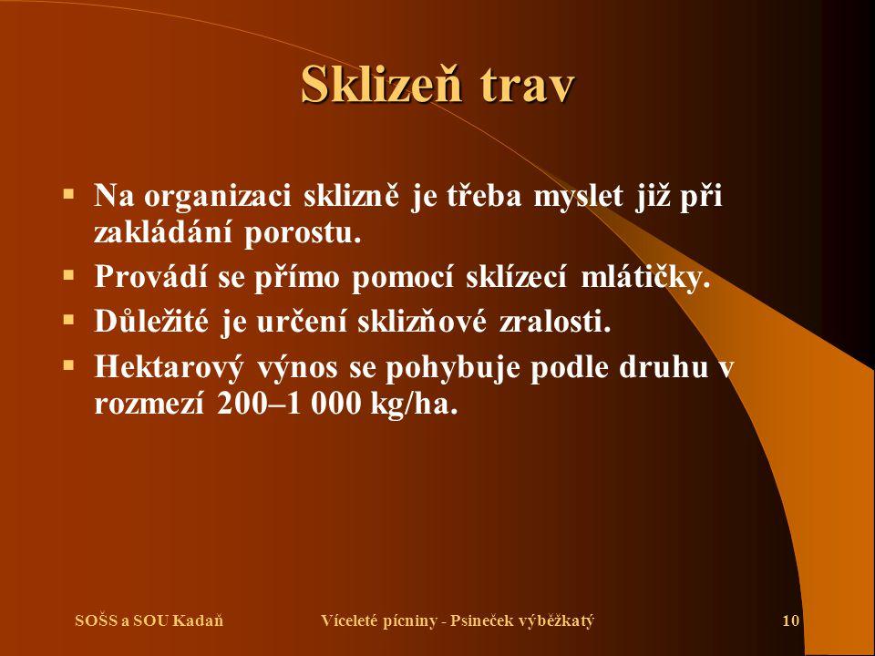 SOŠS a SOU KadaňVíceleté pícniny - Psineček výběžkatý10 Sklizeň trav  Na organizaci sklizně je třeba myslet již při zakládání porostu.
