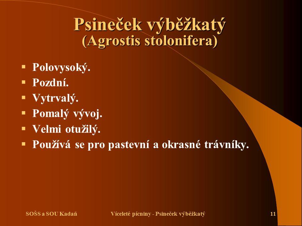 SOŠS a SOU KadaňVíceleté pícniny - Psineček výběžkatý11 Psineček výběžkatý (Agrostis stolonifera)  Polovysoký.