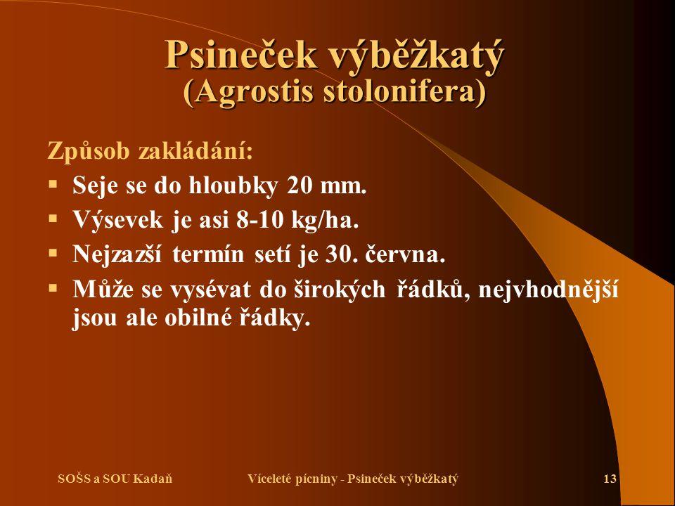 SOŠS a SOU KadaňVíceleté pícniny - Psineček výběžkatý13 Způsob zakládání:  Seje se do hloubky 20 mm.