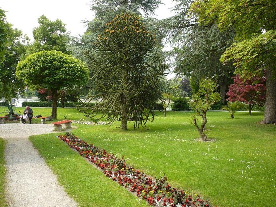 V městském parku jsou vysázeny i vzácnější druhy dřevin.