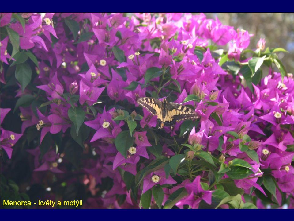 Menorca - květy a motýli