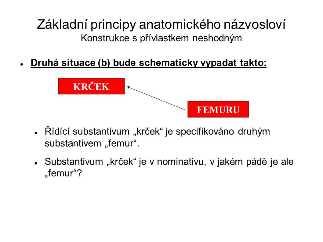 """Základní principy anatomického názvosloví Konstrukce s přívlastkem neshodným Druhá situace (b) bude schematicky vypadat takto: Řídící substantivum """"kr"""
