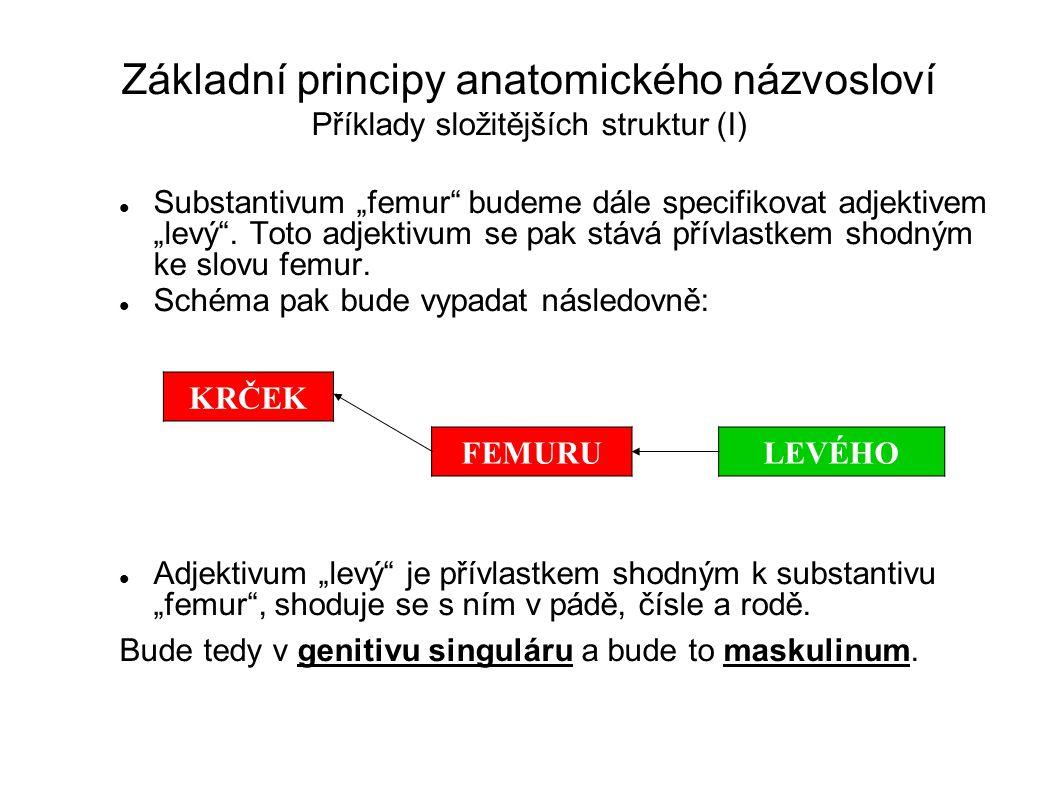 """Základní principy anatomického názvosloví Příklady složitějších struktur (I) Substantivum """"femur"""" budeme dále specifikovat adjektivem """"levý"""". Toto adj"""