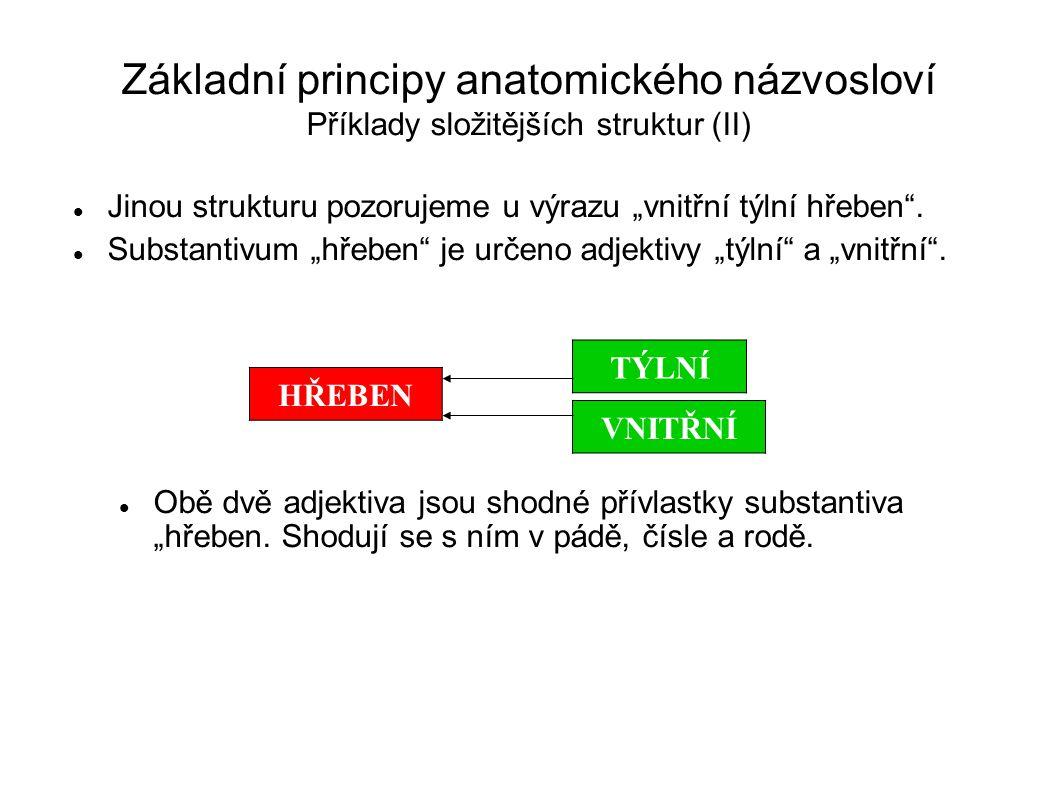"""Základní principy anatomického názvosloví Příklady složitějších struktur (II) Jinou strukturu pozorujeme u výrazu """"vnitřní týlní hřeben"""". Substantivum"""