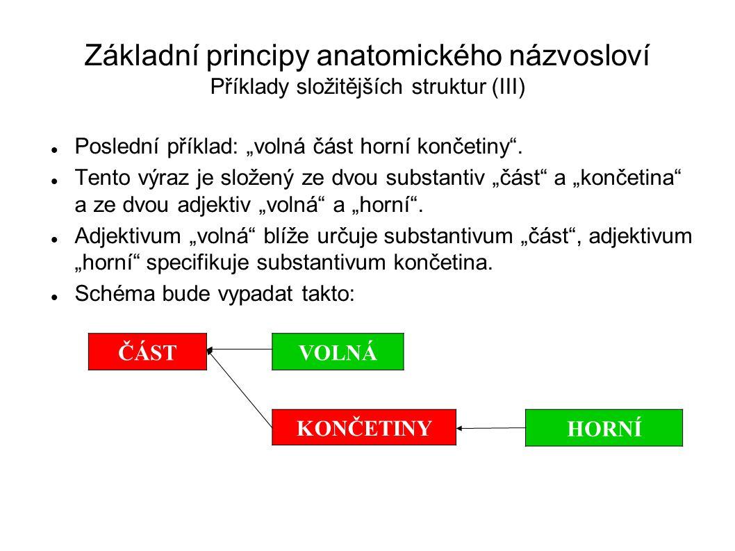 """Základní principy anatomického názvosloví Příklady složitějších struktur (III) Poslední příklad: """"volná část horní končetiny"""". Tento výraz je složený"""