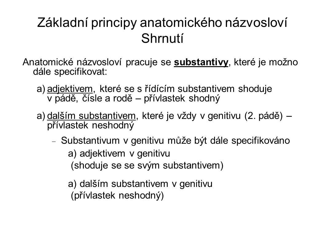 Základní principy anatomického názvosloví Shrnutí Anatomické názvosloví pracuje se substantivy, které je možno dále specifikovat: a)adjektivem, které