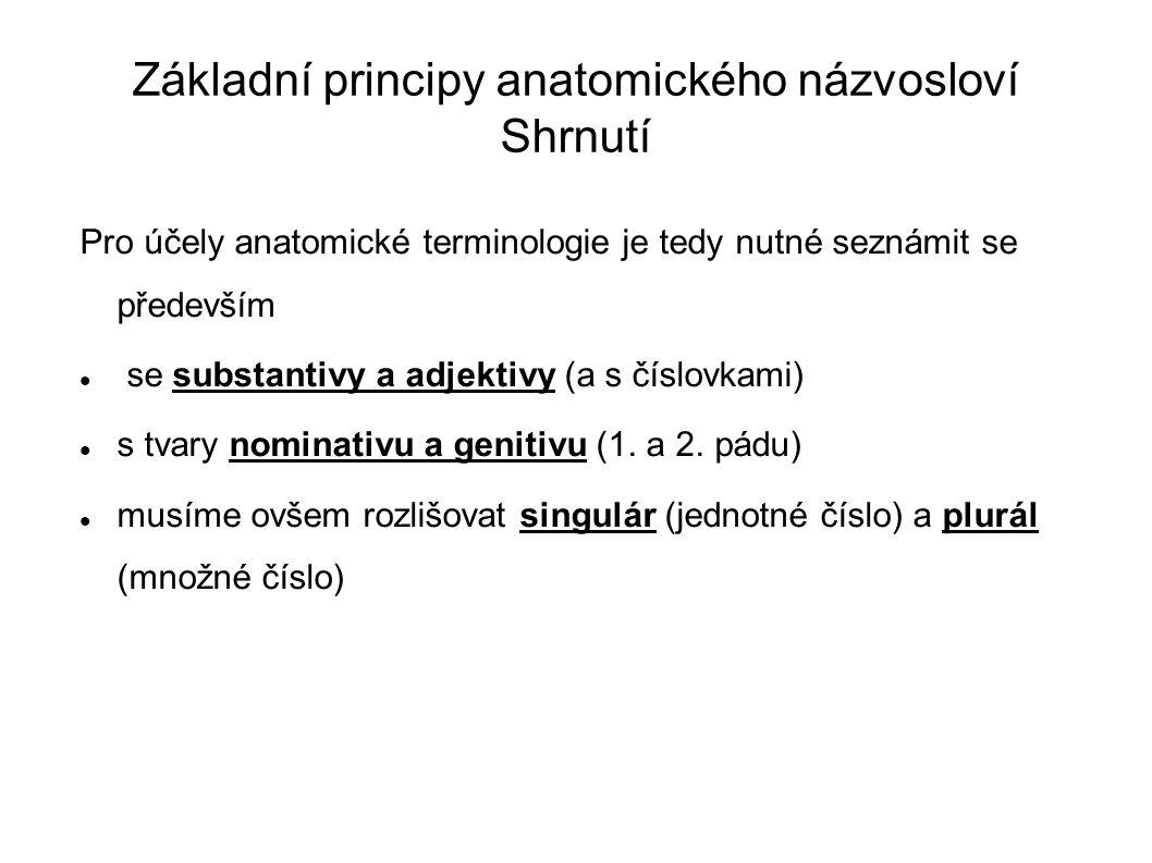 Základní principy anatomického názvosloví Shrnutí Pro účely anatomické terminologie je tedy nutné seznámit se především se substantivy a adjektivy (a