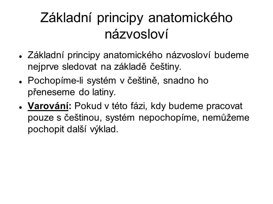 Základní principy anatomického názvosloví Základní principy anatomického názvosloví budeme nejprve sledovat na základě češtiny. Pochopíme-li systém v