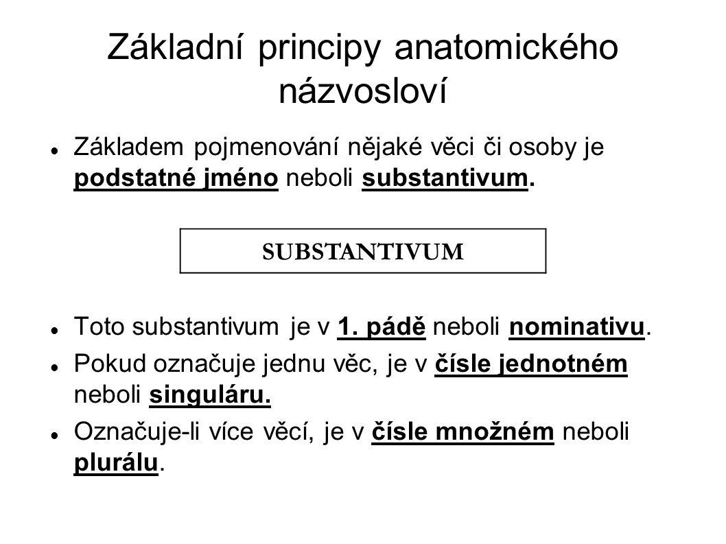 Základní principy anatomického názvosloví Základem pojmenování nějaké věci či osoby je podstatné jméno neboli substantivum. Toto substantivum je v 1.
