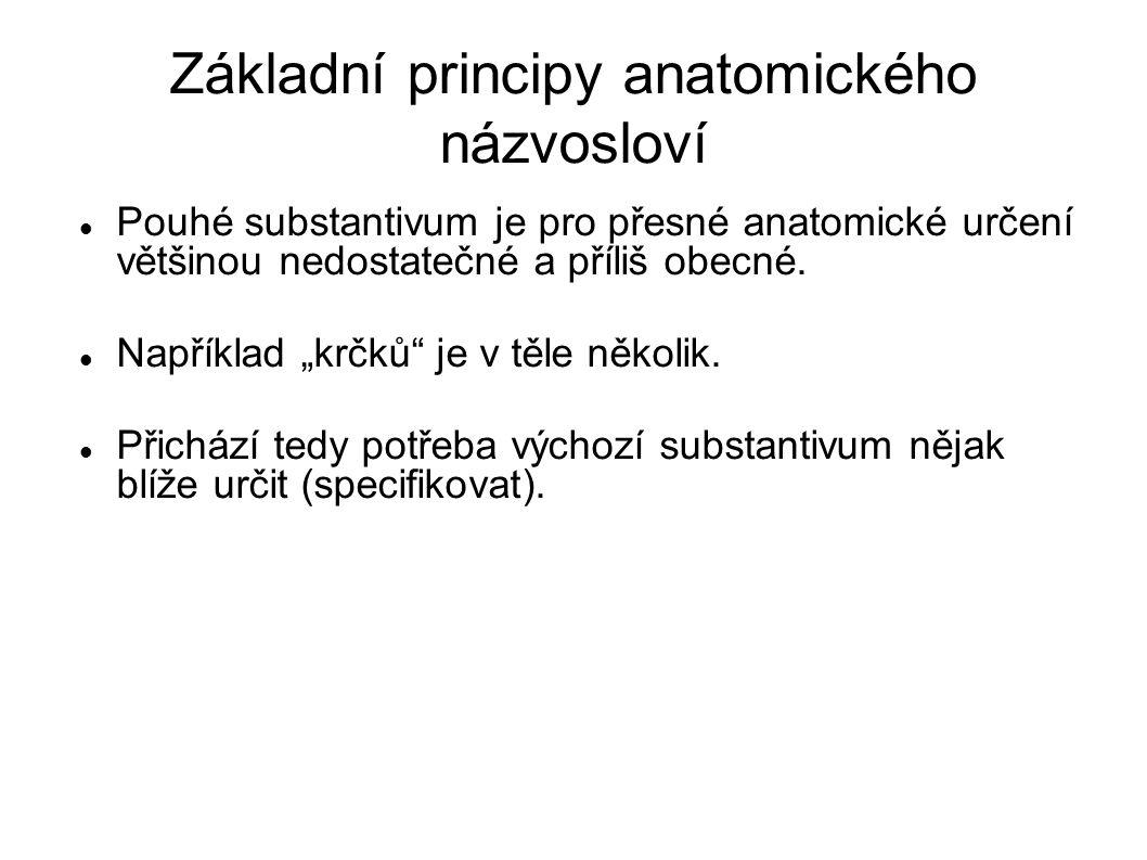 """Základní principy anatomického názvosloví Pouhé substantivum je pro přesné anatomické určení většinou nedostatečné a příliš obecné. Například """"krčků"""""""