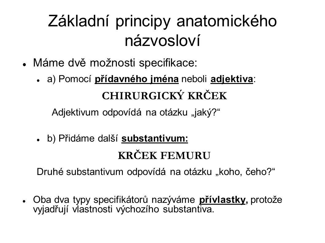Základní principy anatomického názvosloví Máme dvě možnosti specifikace: a) Pomocí přídavného jména neboli adjektiva: CHIRURGICKÝ KRČEK Adjektivum odp