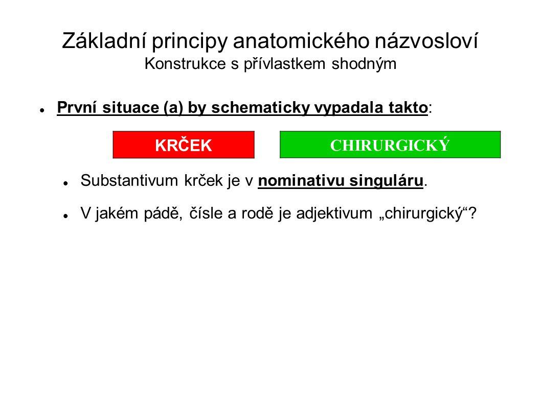 Základní principy anatomického názvosloví Konstrukce s přívlastkem shodným První situace (a) by schematicky vypadala takto: Substantivum krček je v no