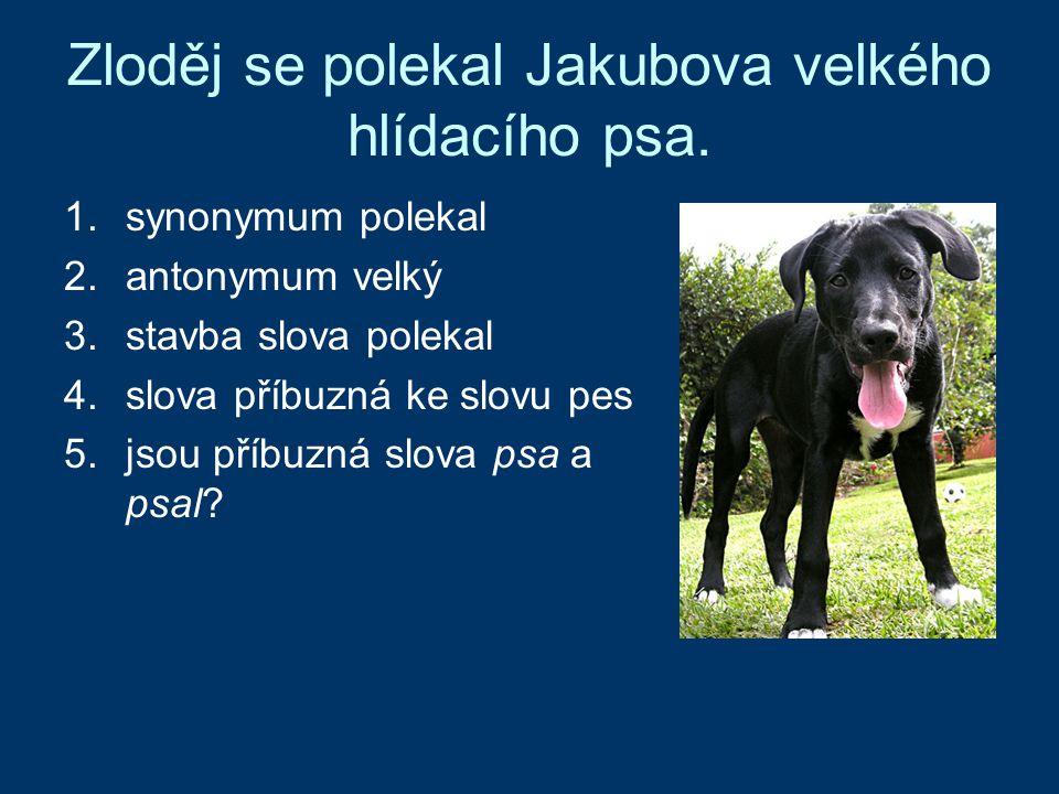 Zloděj se polekal Jakubova velkého hlídacího psa. 1.synonymum polekal 2.antonymum velký 3.stavba slova polekal 4.slova příbuzná ke slovu pes 5.jsou př
