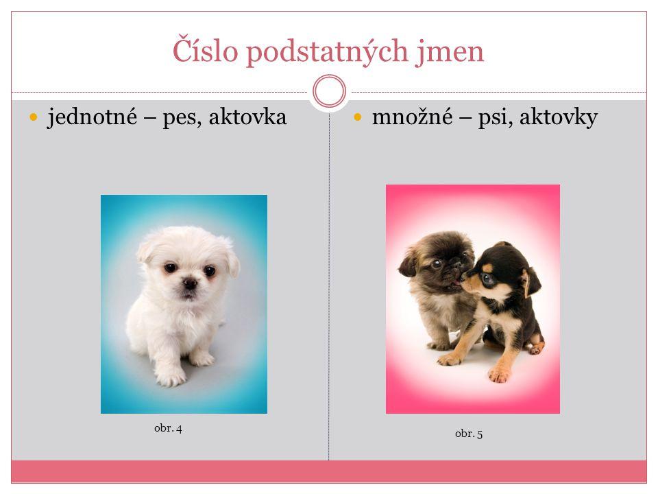 Číslo podstatných jmen jednotné – pes, aktovka množné – psi, aktovky obr. 4 obr. 5