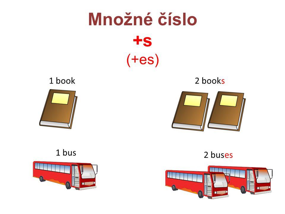 Množné číslo +s (+es) 1 book2 books 1 bus 2 buses