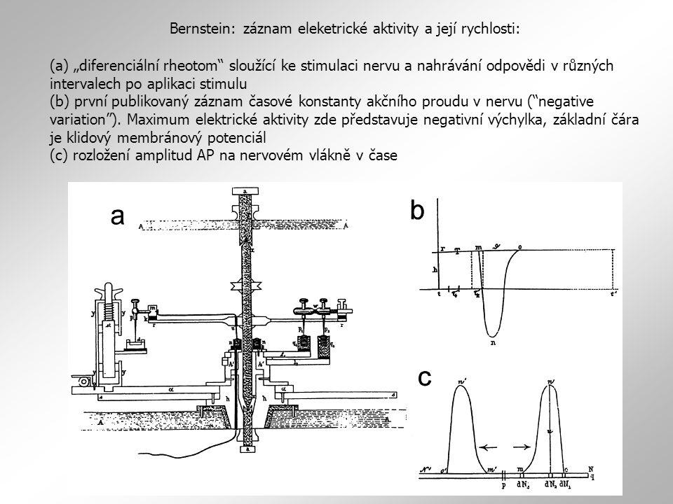 """Bernstein: záznam eleketrické aktivity a její rychlosti: (a) """"diferenciální rheotom"""" sloužící ke stimulaci nervu a nahrávání odpovědi v různých interv"""