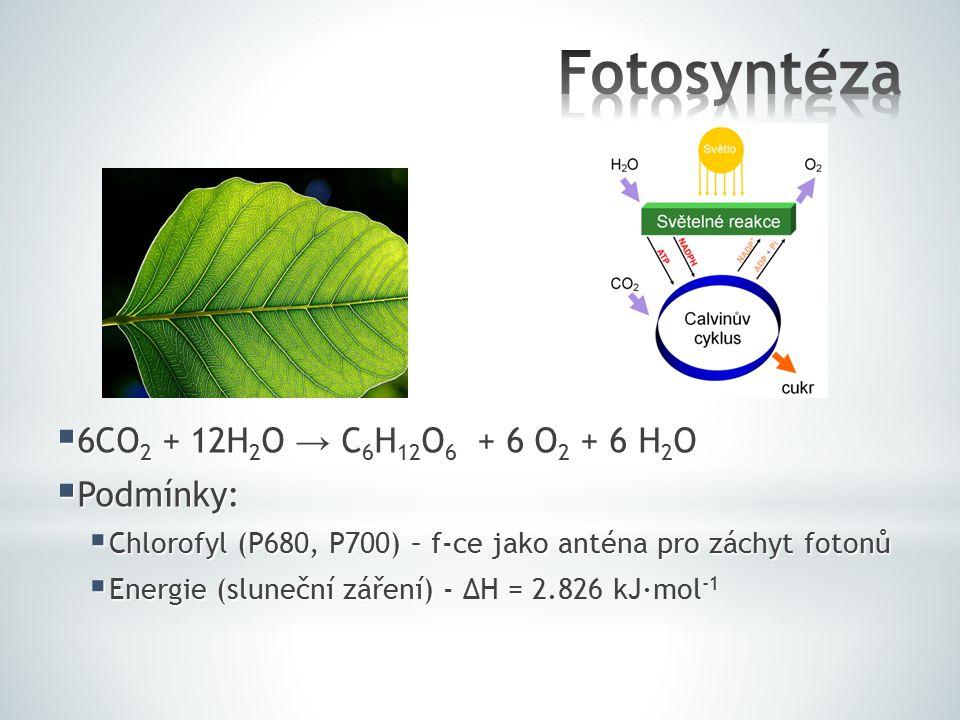  6CO 2 + 12H 2 O → C 6 H 12 O 6 + 6 O 2 + 6 H 2 O  Podmínky:  Chlorofyl (P680, P700) – f-ce jako anténa pro záchyt fotonů  Energie (sluneční zářen