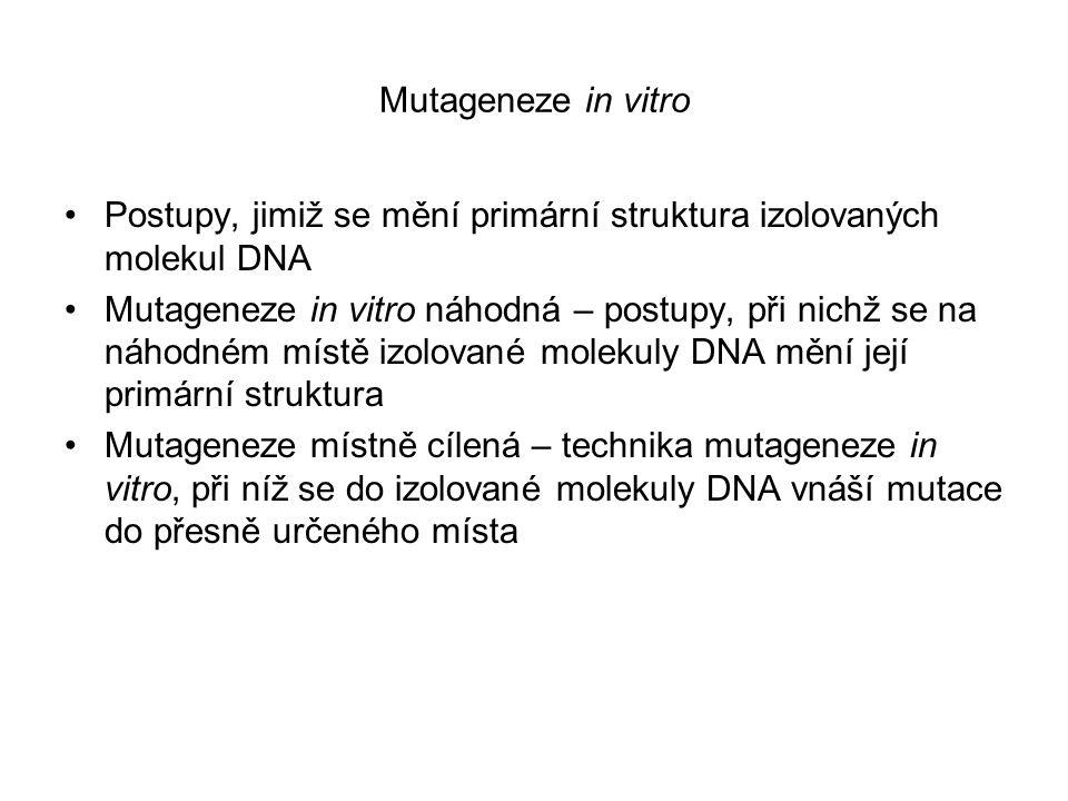 Mutageneze in vitro Postupy, jimiž se mění primární struktura izolovaných molekul DNA Mutageneze in vitro náhodná – postupy, při nichž se na náhodném