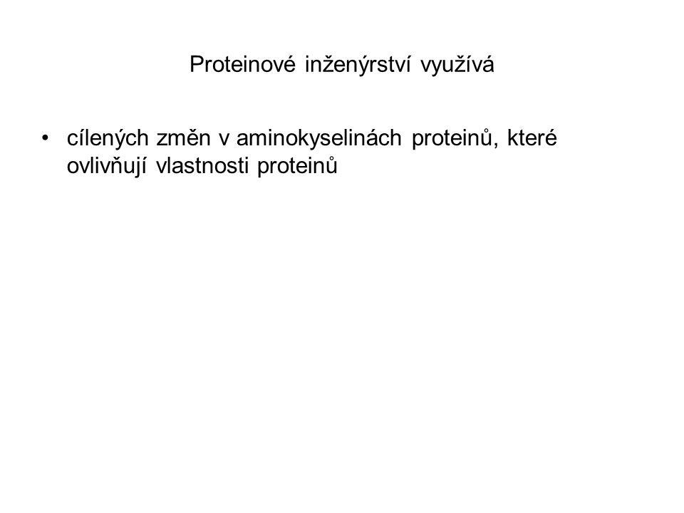 Proteinové inženýrství využívá cílených změn v aminokyselinách proteinů, které ovlivňují vlastnosti proteinů
