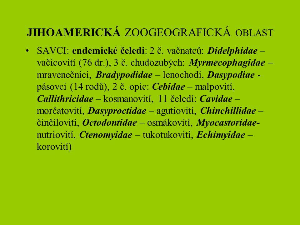 SAVCI: endemické čeledi: 2 č. vačnatců: Didelphidae – vačicovití (76 dr.), 3 č. chudozubých: Myrmecophagidae – mravenečníci, Bradypodidae – lenochodi,