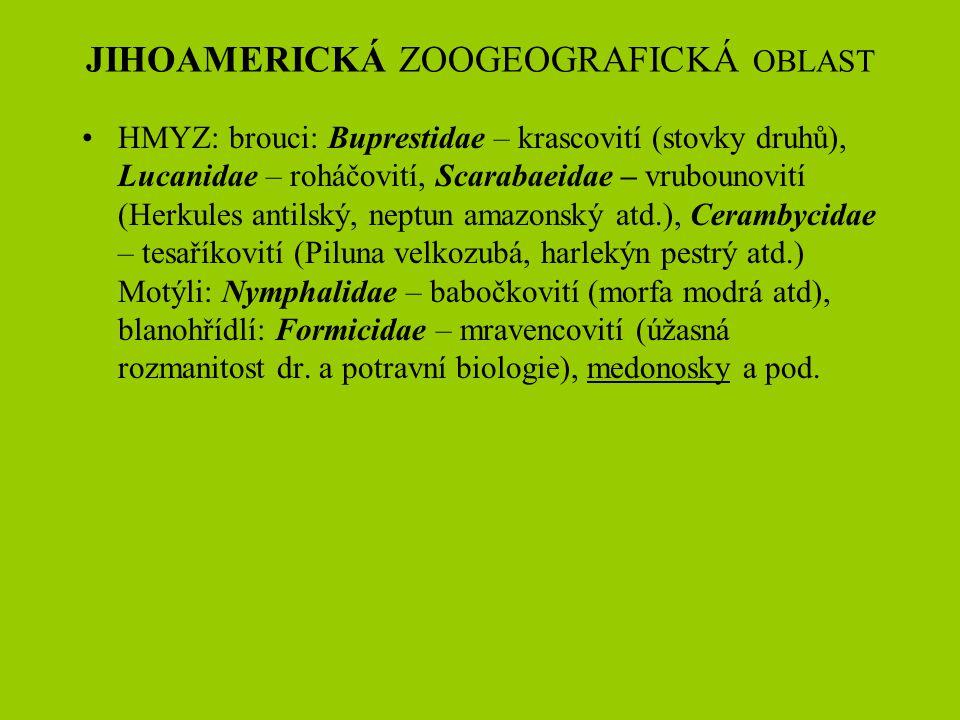 JIHOAMERICKÁ ZOOGEOGRAFICKÁ OBLAST HMYZ: brouci: Buprestidae – krascovití (stovky druhů), Lucanidae – roháčovití, Scarabaeidae – vrubounovití (Herkule