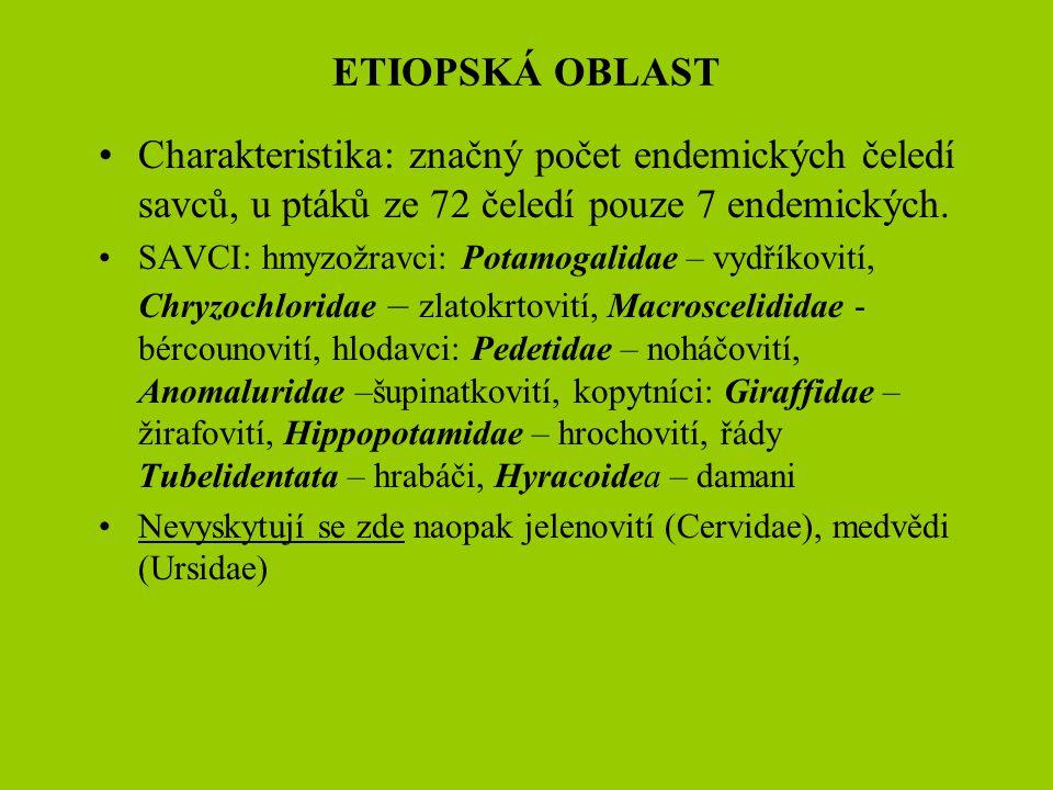 ETIOPSKÁ OBLAST Charakteristika: značný počet endemických čeledí savců, u ptáků ze 72 čeledí pouze 7 endemických. SAVCI: hmyzožravci: Potamogalidae –