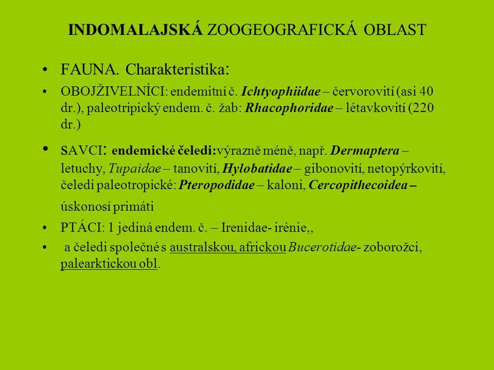 INDOMALAJSKÁ ZOOGEOGRAFICKÁ OBLAST FAUNA. Charakteristika : OBOJŽIVELNÍCI: endemitní č. Ichtyophiidae – červorovití (asi 40 dr.), paleotripický endem.