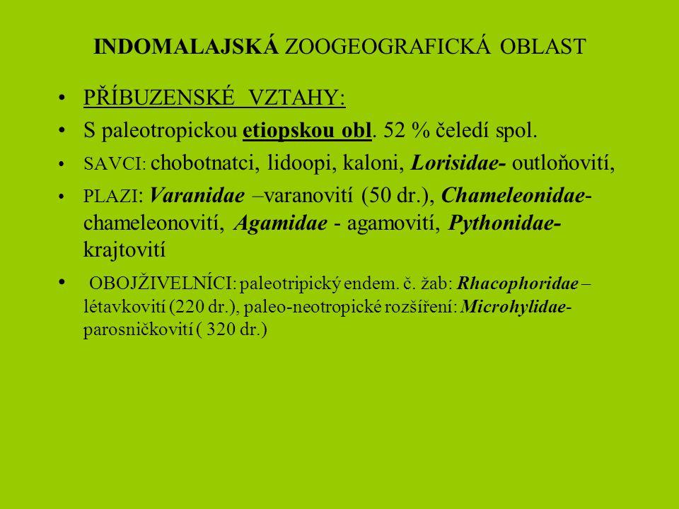 INDOMALAJSKÁ ZOOGEOGRAFICKÁ OBLAST PŘÍBUZENSKÉ VZTAHY: S paleotropickou etiopskou obl. 52 % čeledí spol. SAVCI: chobotnatci, lidoopi, kaloni, Lorisida
