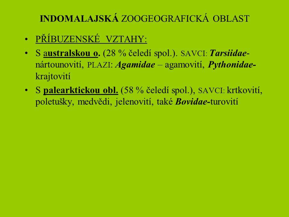 INDOMALAJSKÁ ZOOGEOGRAFICKÁ OBLAST PŘÍBUZENSKÉ VZTAHY: S australskou o. (28 % čeledí spol.). SAVCI: Tarsiidae- nártounovití, PLAZI : Agamidae – agamov
