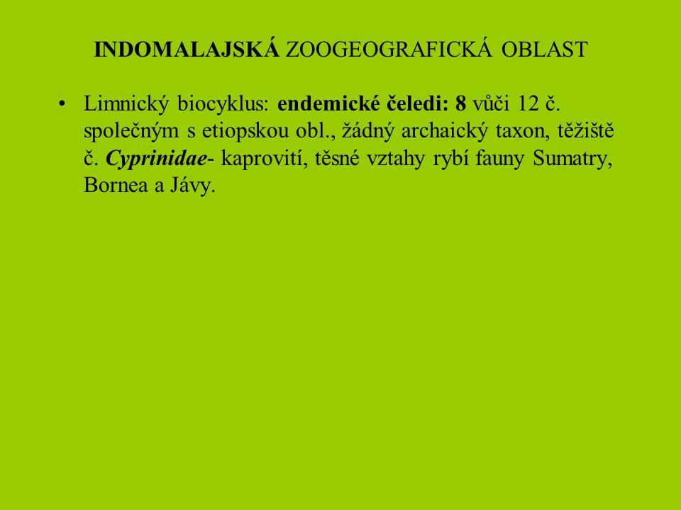 INDOMALAJSKÁ ZOOGEOGRAFICKÁ OBLAST Limnický biocyklus: endemické čeledi: 8 vůči 12 č. společným s etiopskou obl., žádný archaický taxon, těžiště č. Cy