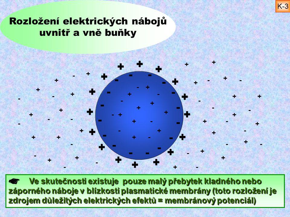 + + + + + + + + + + + + + + + + - - - - - - - - - - -- - - - - Rozložení elektrických nábojů uvnitř a vně buňky Ve skutečnosti existuje pouze malý pře