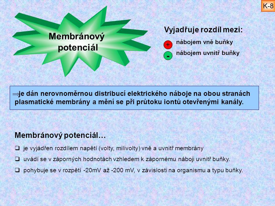 Membránový potenciál…  je vyjádřen rozdílem napětí (volty, milivolty) vně a uvnitř membrány  uvádí se v záporných hodnotách vzhledem k zápornému náb