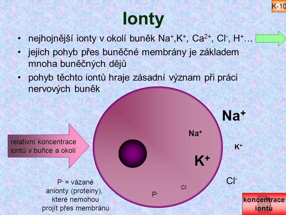 Ionty nejhojnější ionty v okolí buněk Na +,K +, Ca 2+, Cl -, H + … jejich pohyb přes buněčné membrány je základem mnoha buněčných dějů pohyb těchto io