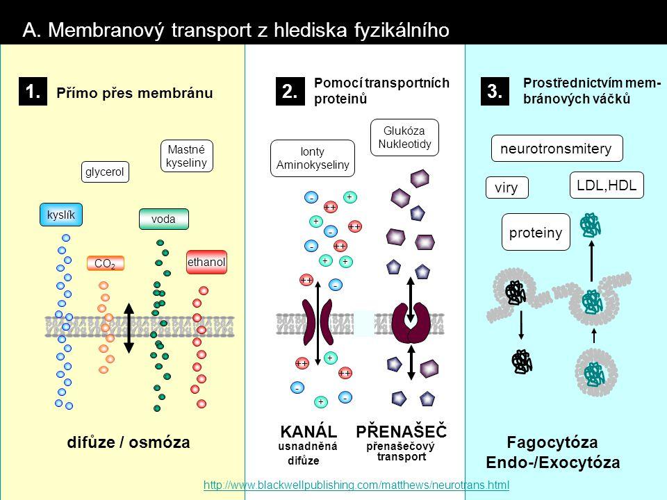 CO 2 voda kyslík A. Membranový transport z hlediska fyzikálního + ++ - - - - - + + + + - + glycerol Mastné kyseliny difůze / osmóza KANÁL usnadněná di