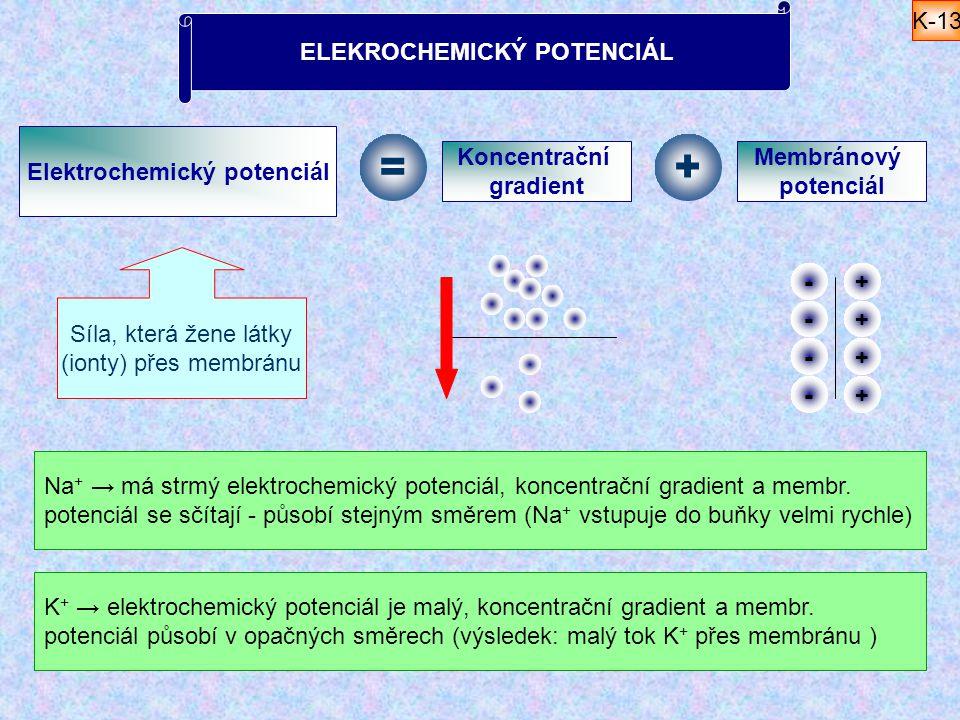 Elektrochemický potenciál Síla, která žene látky (ionty) přes membránu = Koncentrační gradient + Membránový potenciál ELEKROCHEMICKÝ POTENCIÁL + + + +