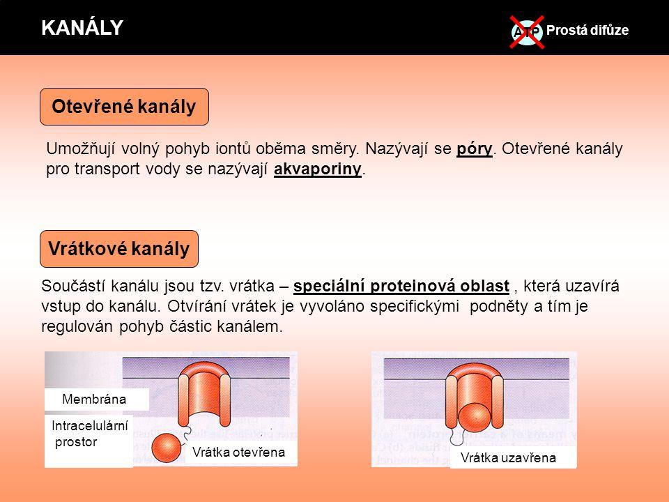 Součástí kanálu jsou tzv. vrátka – speciální proteinová oblast, která uzavírá vstup do kanálu. Otvírání vrátek je vyvoláno specifickými podněty a tím