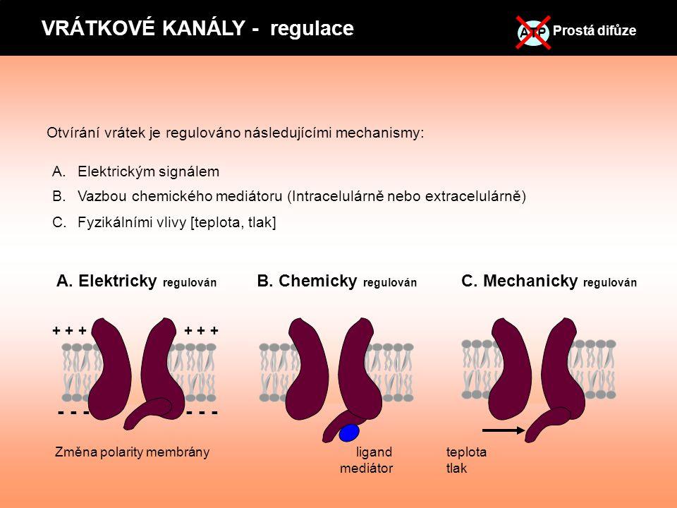 VRÁTKOVÉ KANÁLY - regulace Prostá difůze ATP T A. Elektricky regulován C. Mechanicky regulován Otvírání vrátek je regulováno následujícími mechanismy: