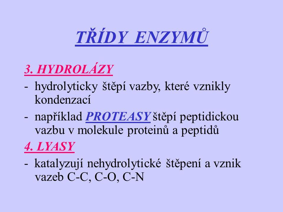 TŘÍDY ENZYMŮ 3. HYDROLÁZY -hydrolyticky štěpí vazby, které vznikly kondenzací -například PROTEASY štěpí peptidickou vazbu v molekule proteinů a peptid