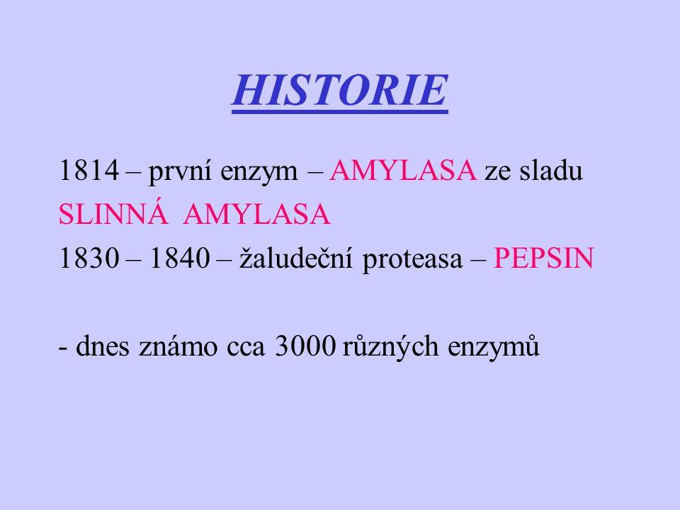 HISTORIE 1814 – první enzym – AMYLASA ze sladu SLINNÁ AMYLASA 1830 – 1840 – žaludeční proteasa – PEPSIN - dnes známo cca 3000 různých enzymů
