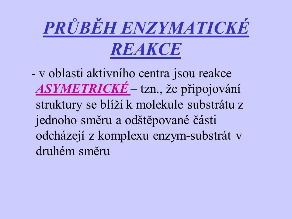 PRŮBĚH ENZYMATICKÉ REAKCE - v oblasti aktivního centra jsou reakce ASYMETRICKÉ – tzn., že připojování struktury se blíží k molekule substrátu z jednoh
