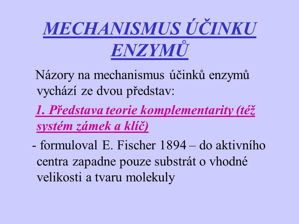 MECHANISMUS ÚČINKU ENZYMŮ Názory na mechanismus účinků enzymů vychází ze dvou představ: 1. Představa teorie komplementarity (též systém zámek a klíč)