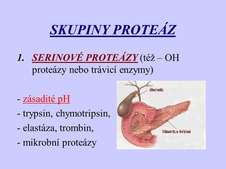 SKUPINY PROTEÁZ 1.SERINOVÉ PROTEÁZY (též – OH proteázy nebo trávicí enzymy) - zásadité pH - trypsin, chymotripsin, - elastáza, trombin, - mikrobní pro