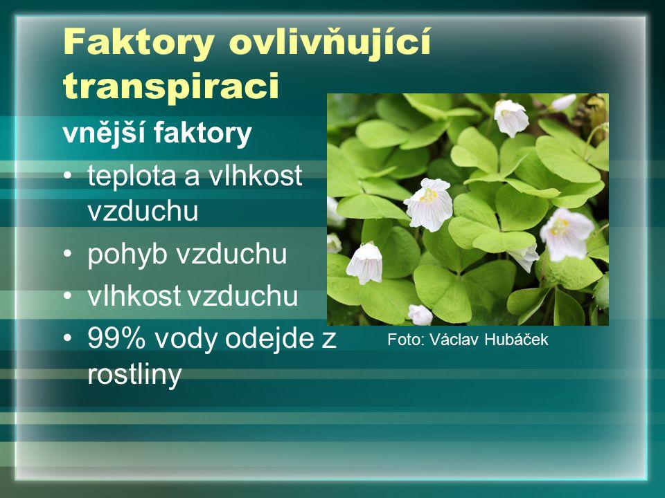 Faktory ovlivňující transpiraci vnější faktory teplota a vlhkost vzduchu pohyb vzduchu vlhkost vzduchu 99% vody odejde z rostliny Foto: Václav Hubáček