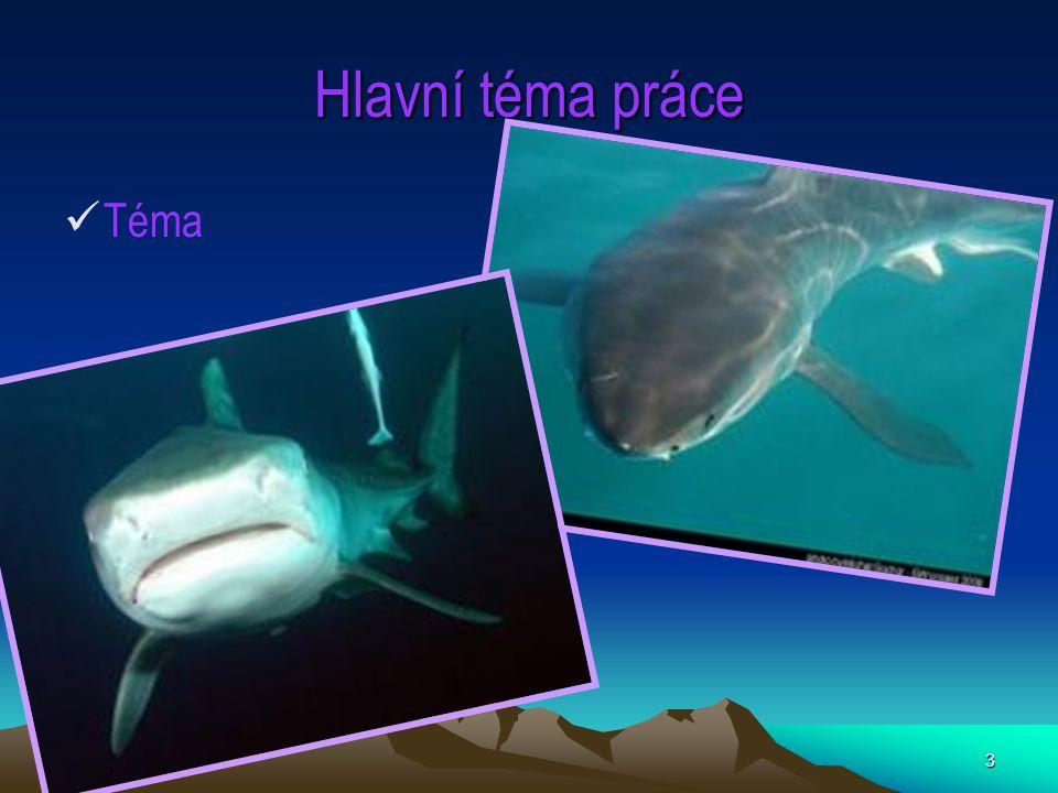 4 Obecné informace Žraloci patří mezi chrupavčité ryby.