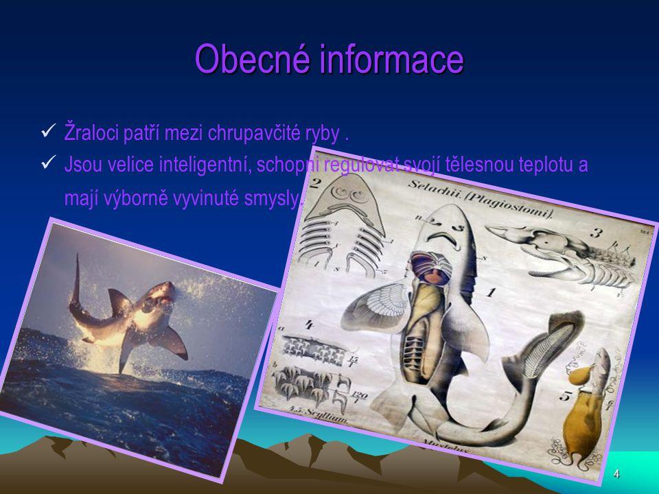 4 Obecné informace Žraloci patří mezi chrupavčité ryby. Jsou velice inteligentní, schopni regulovat svojí tělesnou teplotu a mají výborně vyvinuté smy