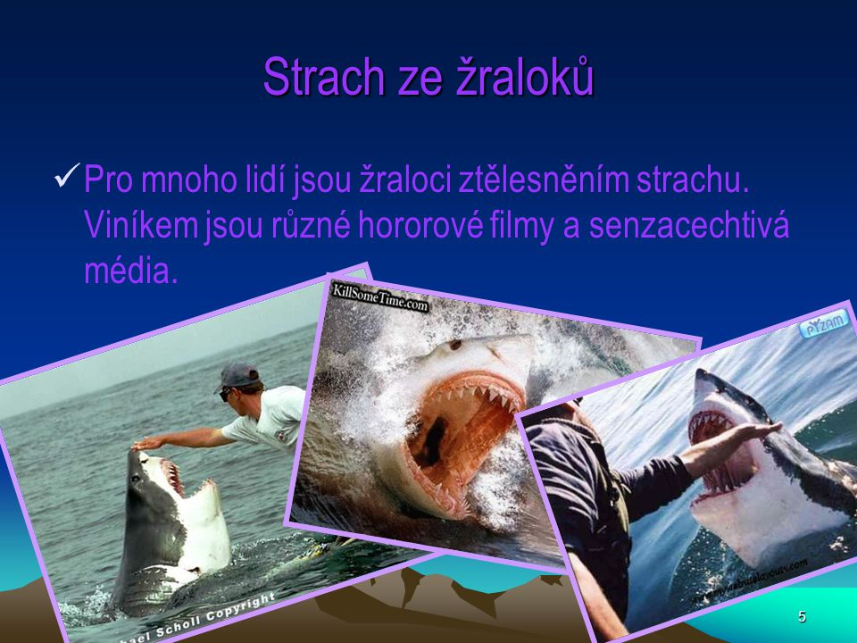 5 Strach ze žraloků Pro mnoho lidí jsou žraloci ztělesněním strachu. Viníkem jsou různé hororové filmy a senzacechtivá média.