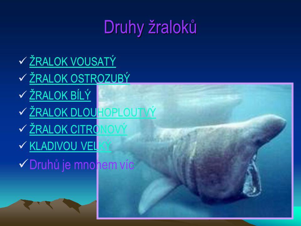 9 Druhy žraloků ŽRALOK VOUSATÝ ŽRALOK OSTROZUBÝ ŽRALOK BÍLÝ ŽRALOK DLOUHOPLOUTVÝ ŽRALOK CITRONOVÝ KLADIVOU VELKÝ Druhů je mnohem víc