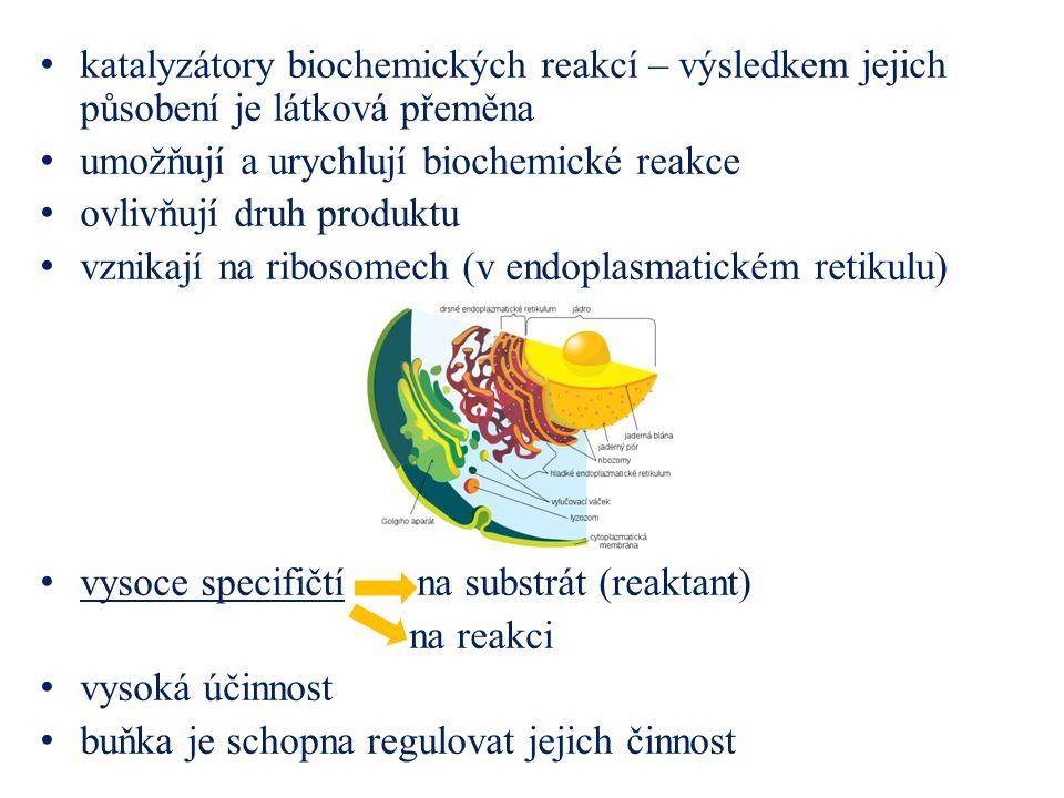 katalyzátory biochemických reakcí – výsledkem jejich působení je látková přeměna umožňují a urychlují biochemické reakce ovlivňují druh produktu vznik