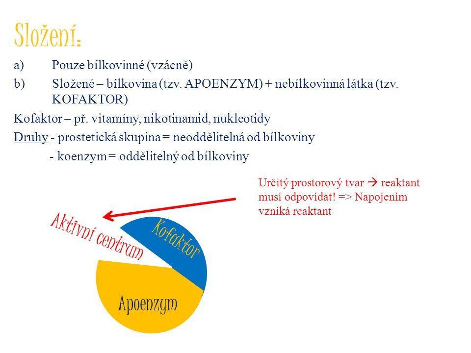 Složení: a)Pouze bílkovinné (vzácně) b)Složené – bílkovina (tzv. APOENZYM) + nebílkovinná látka (tzv. KOFAKTOR) Kofaktor – př. vitamíny, nikotinamid,