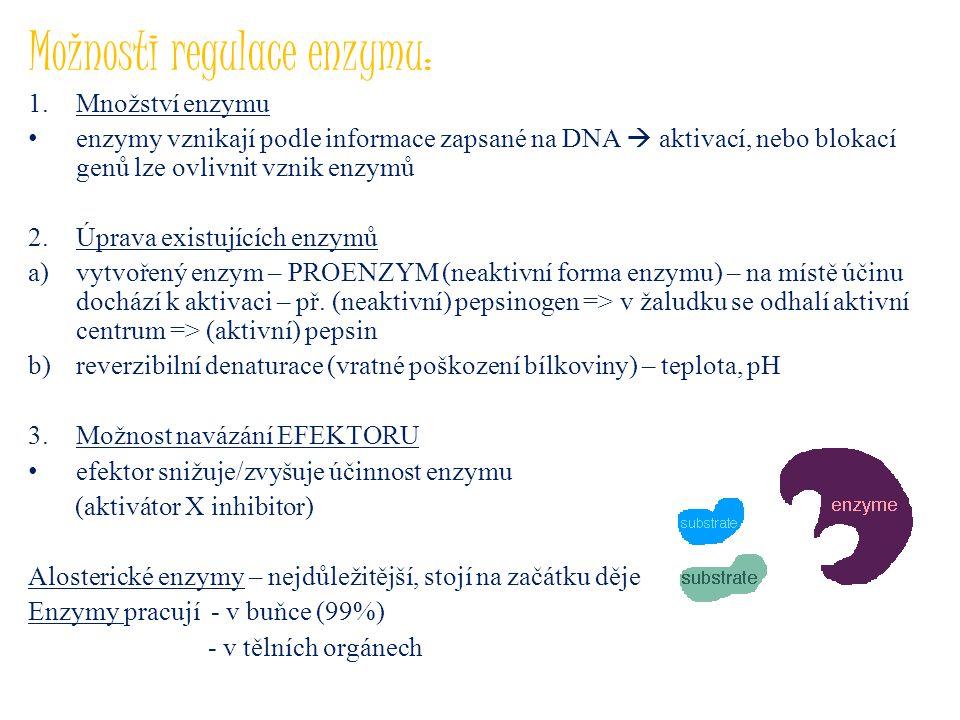 Možnosti regulace enzymu: 1.Množství enzymu enzymy vznikají podle informace zapsané na DNA  aktivací, nebo blokací genů lze ovlivnit vznik enzymů 2.Ú